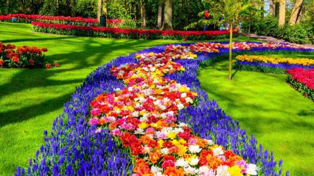 庫肯霍夫(Keukenhof)是世界上最大的鱗莖花園©Olena Z / Shutterstock