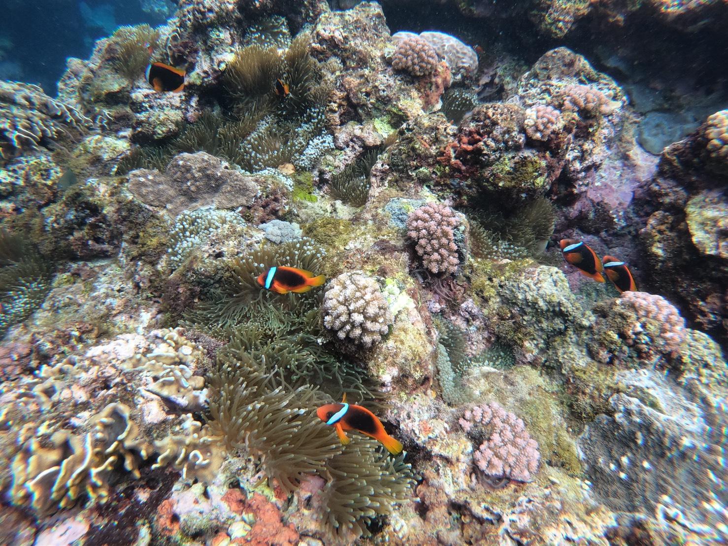 影/蘭嶼珊瑚爆發性白化 網怒批:都是防曬乳液害的