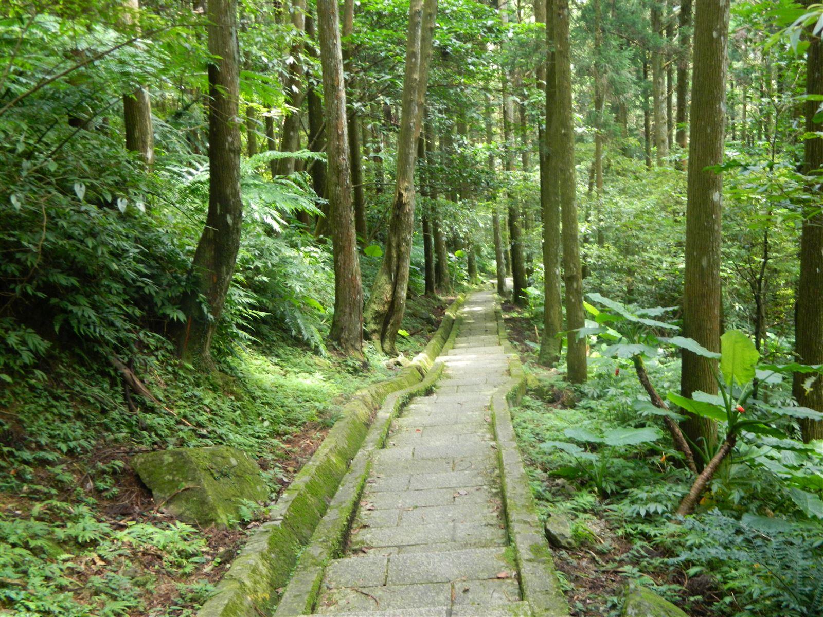 林務局發布「升級三級防疫警戒,林務局位於臺北市、新北市、宜蘭縣與桃園市各森林育樂場域5/15至5/28休園」